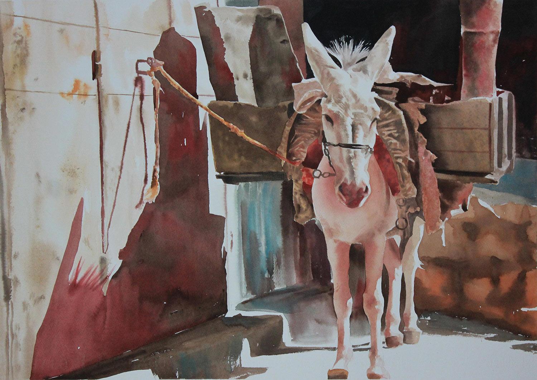 Mulo - 38x56 acquerello su carta